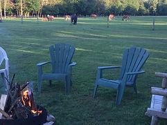 Campfire - horses behind.jpg