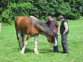 2013-06-15-K,Ross&Horses7.JPG