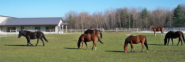 Horses in pasture at Spirit's Whisper Ranch