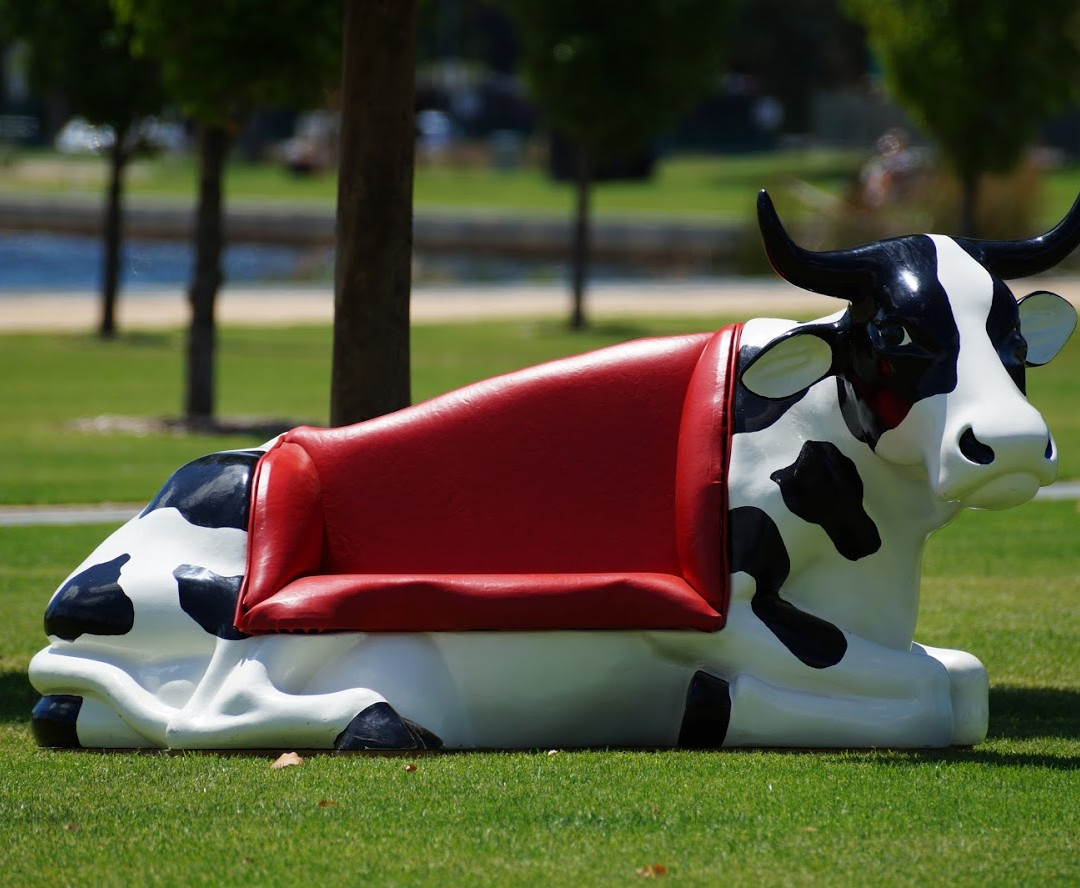 Couch Cow