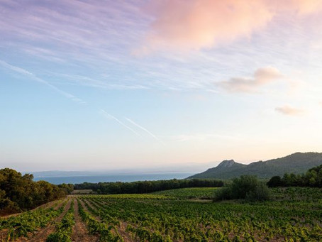 Love Island: why Chanel bought Domaine de l'Ile on Porquerolles