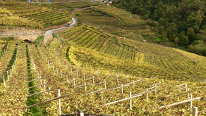 Connecting with Wine Growers the PICA Way