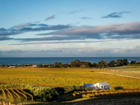Credit Where Credit is Due: Hawke's Bay's stellar Chardonnays and a debt to Australia