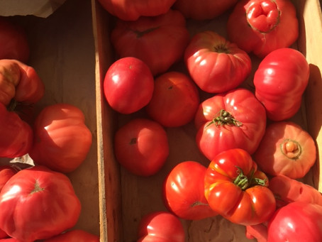 Tomatoes: Introduction & How To Peel