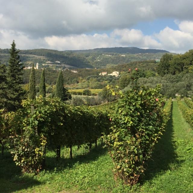 Valpolicella hillside vineyards