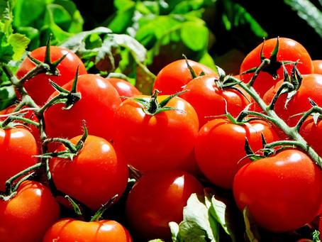 Tomatoes: Spanish Tomato Sauce
