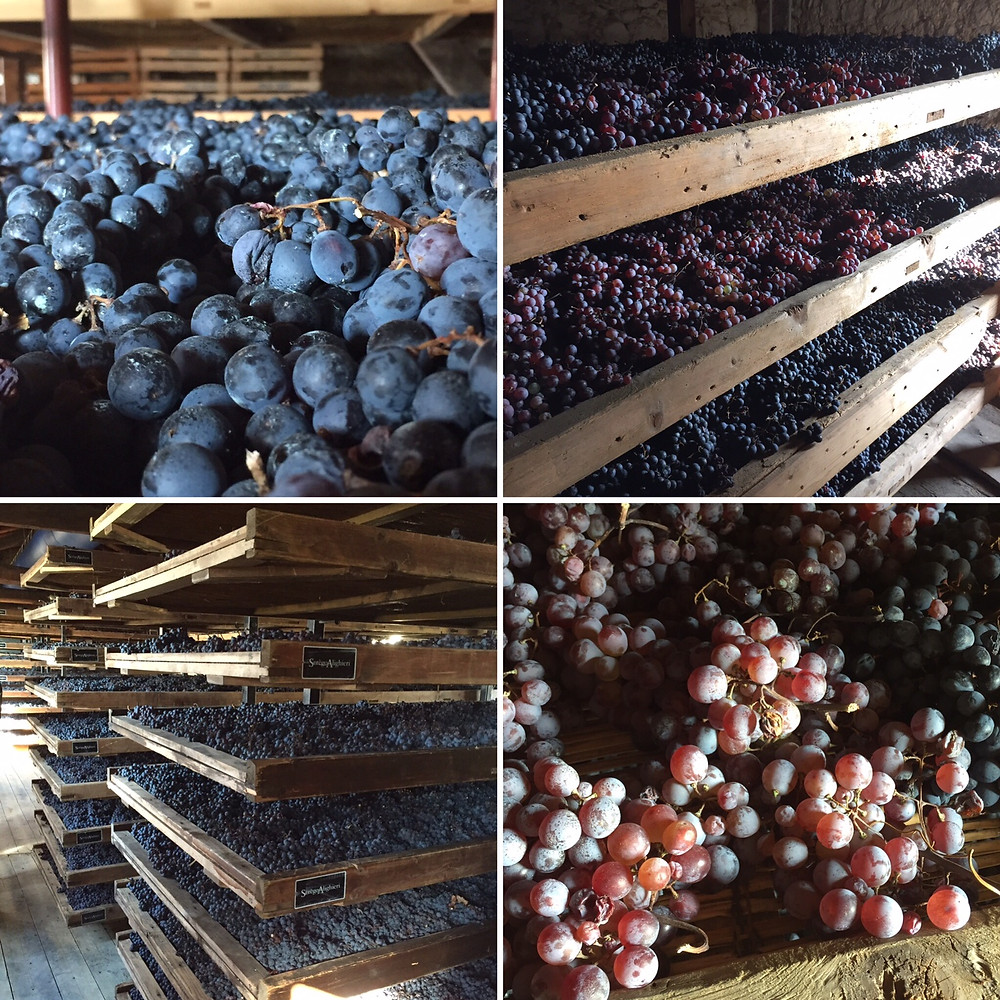 Grapes for Amarone