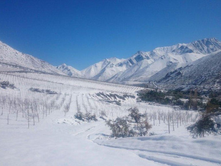 Go Grow it on a Mountain: extreme winemaking in Chile