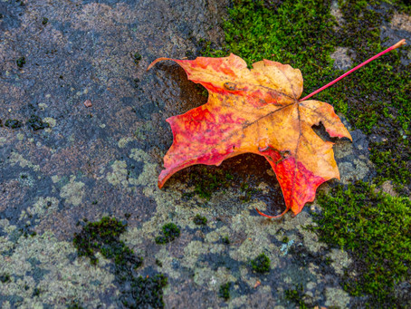 Fall into the Fall Macro Season!