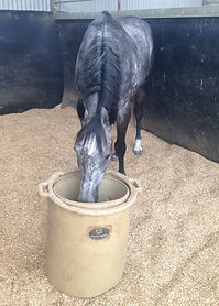 Champion sprinter Chautauqua demonstrates the ease of using the Porta-Grazer during a training stint at Booralite Park