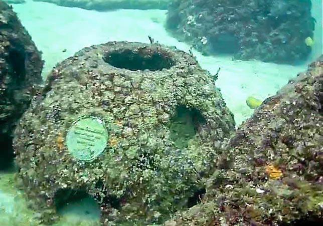 Eternal-Reefs
