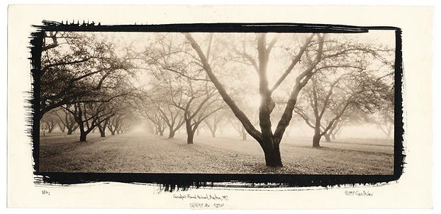 Chris McCaw. Grandpa's almond orchard
