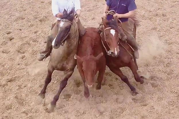 An aerial view, shot from a drone, picturing two cowboys on a horse sandwiching a bull.