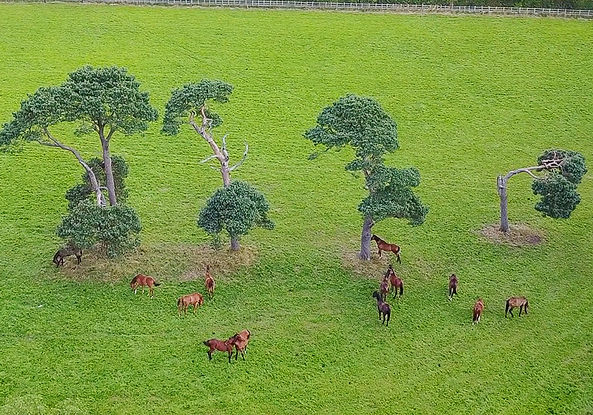 An aerial view, shot from a drone, picturing a green field with horses and trees.