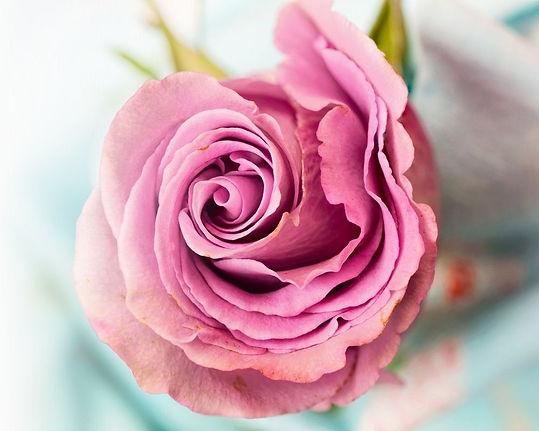rose-award-woman-within