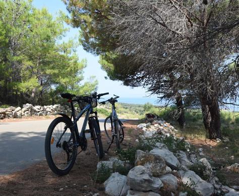 Bike Vir 2.JPG