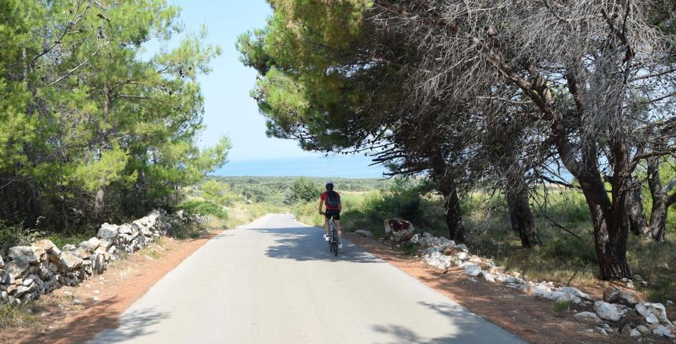 Bike Vir 3.JPG