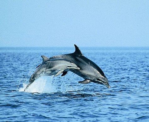 2 Delfine.jpg