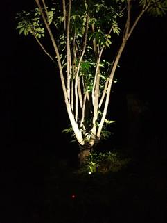 Tree with 6W 125 4000K.jpg