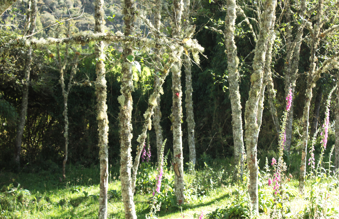 Bosque nativo