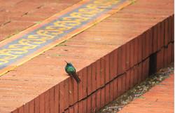 Como colibrí por su casa