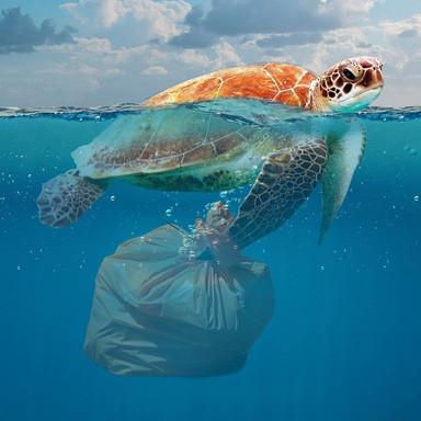 Basura y especies marinas
