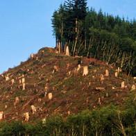 La evolución de la deforestación