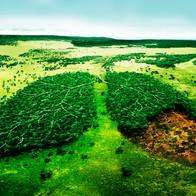 Simil bosque - pulmones vs deforestación
