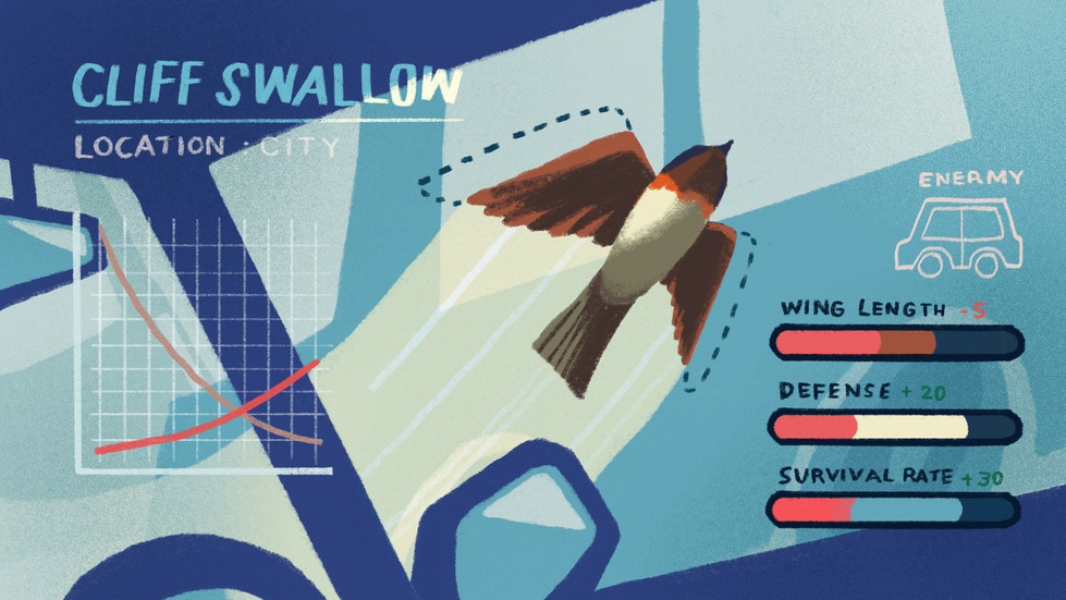 1. Cliff Swallow.jpg