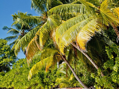 Traveling in Chagos: BBC Travel Article from Diane Selkirk