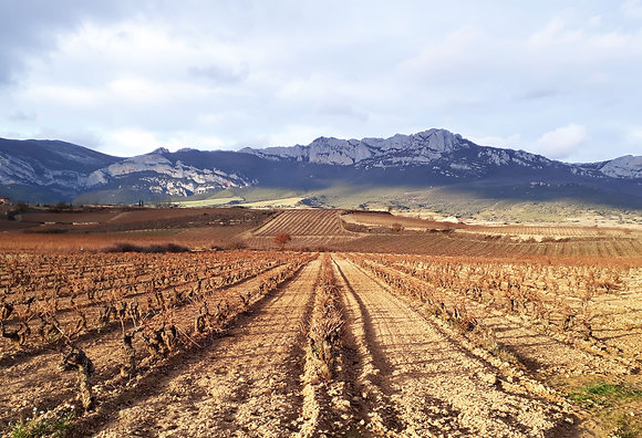 Rioja - mastering maturation - 15 September 2019