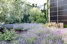 lavendeldach-bienenstock-photovoltaik.jp