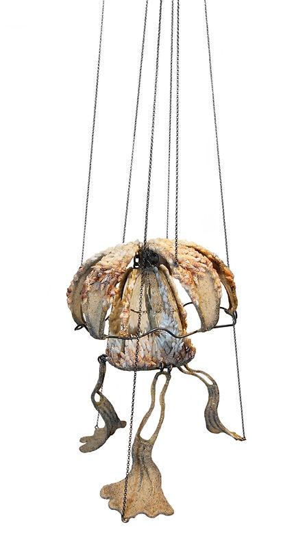 Flor de Medusa.jpg