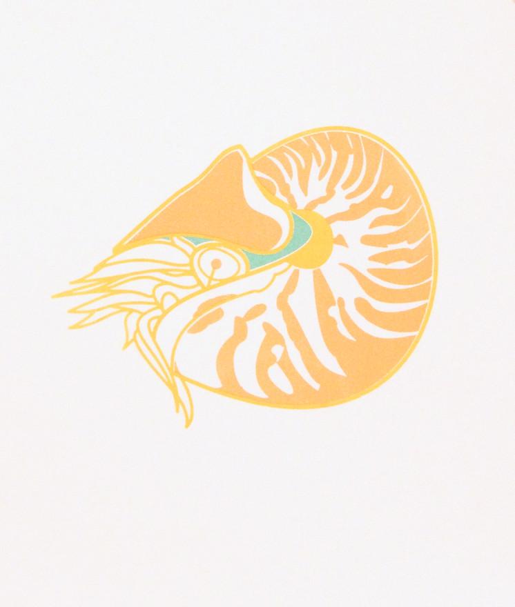 Nautilus: In Admiration