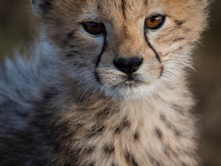 Micro Tutoriel photo animalière... Visez les Yeux!