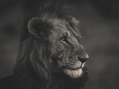 Photo Safari: 15 tips for a successful photo safari