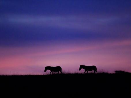 A Photographer's Dream Week in the Mara North Conservancy, Kenya