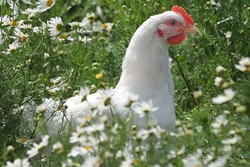pastured non GMO chicken box 2