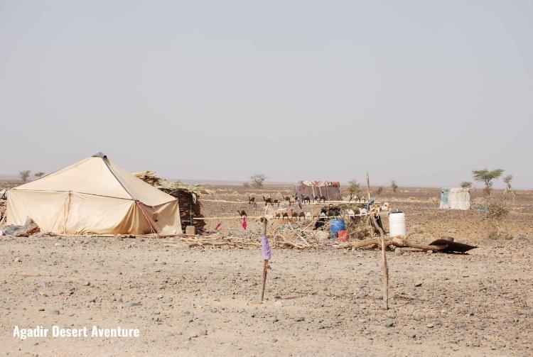 Les nomades du désert