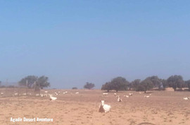Parc national de Souss-Massa