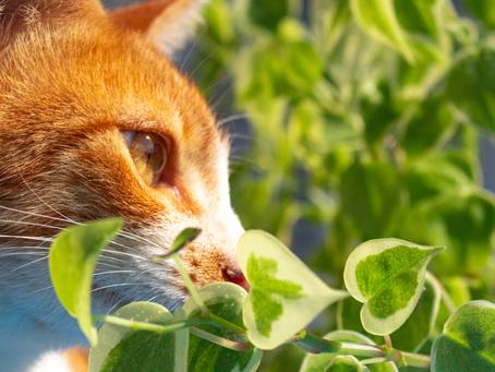 Gatti e piante: quali è sconsigliato tenere sul balcone e in giardino