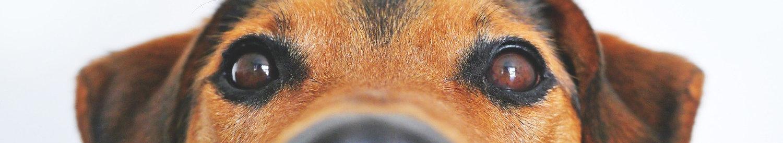 dog-838281_1920 (1)_edited.jpg