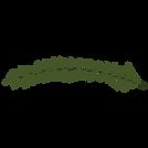Kiefer Fichte Zweige 10