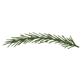 Pine Spruce Branches 10
