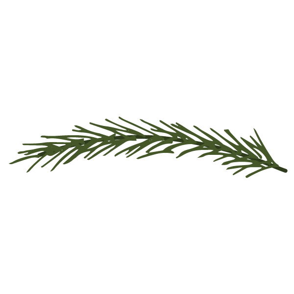 Las ramas de pino Spruce 10