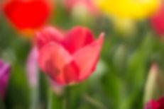 Singular Focus Photography referral program