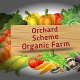 Orchard Scheme