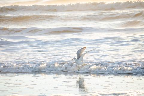 Shore2021-43.jpg