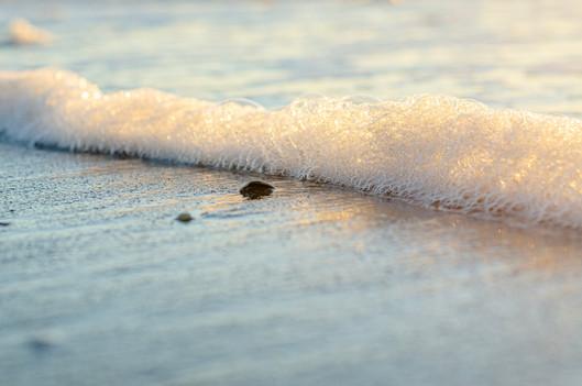 Shore2021-37.jpg