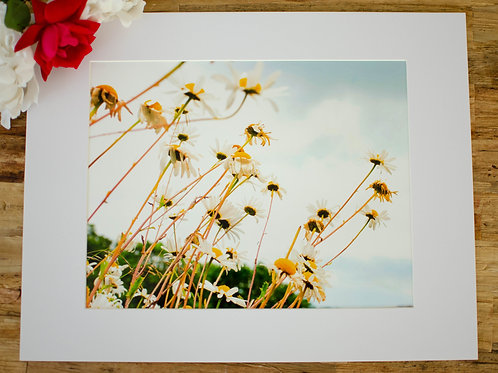 FLOWERS BY THE COAST  - 8x10